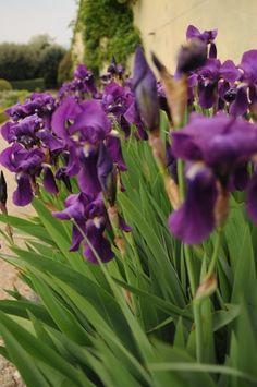 The Iris Garden in Florence