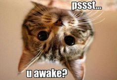 Hahaha my cats always do that to me