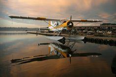 The de Havilland Canada Beaver is a single-engined, high-wing, propeller-driven, STOL aircraft . Sea Plane, Float Plane, Stol Aircraft, Bush Pilot, Aircraft Images, Bush Plane, Airplane Pilot, Private Plane, Flying Boat