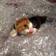 Bubble wrapped Sushi