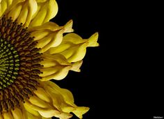 Cecelia Webber's Intricate Flowers - See what makes up the flowers?