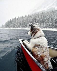 "10.8k Likes, 49 Comments - Adventure •Travel• Wanderlust (/wanderout/) on Instagram: ""Snowy dog on the Upper Kananaskis Lake. ©️️ @trailsandbears #wanderout"""