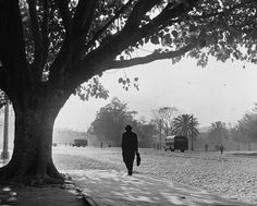 Parque D Pedro - 1949 (by German Lorca)