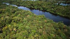 Amazonestam breekt benen illegale houthakkers - Nieuws - VK