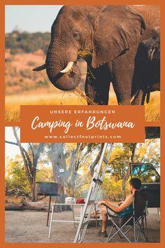 Unserer Camping Reise durch Botswana war abenteuerlich und wunderschön. Wir haben Safaris im Moremi und Chobe Nationalpark unternommen und konnten jede Menge Wildtiere beobachten. Da die Camping-Plätze im Moremi und Chobe nicht eingezäunt sind, können alle Wildtiere die Camps durchqueren. In diesem Artikel schreiben wir über unsere Erfahrungen und Erlebnisse. #Botswana #Camping #Rundreise #Safari