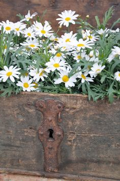 primitive box for simple country style flowers