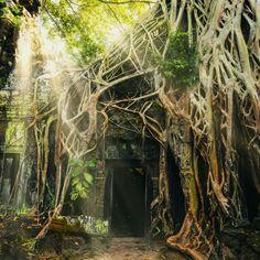 Angkor Temple Wall Mural | Eazywallz