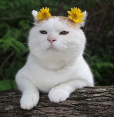 """""""You may address me as queen of the world."""" Come follow me at http://www.pinterest.com/cattreehouse/"""