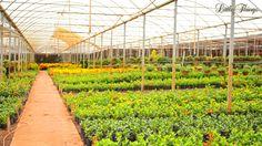Dicas de Cultivo - Spagnhol Plantas Ornamentais
