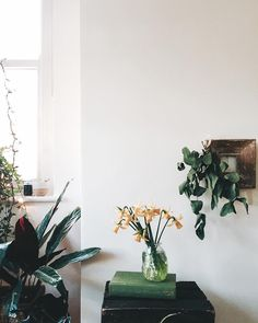 Indoor plants + daff