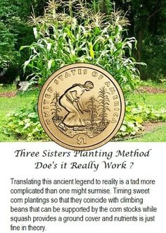 Three Sisters Planting Method - Doe's it Really Work?