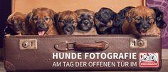 Hunde Fotografie | Fressnapf Heilbronn | April 2016