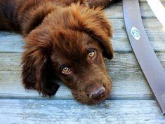 Propreté du chiot : apprenez la propreté à votre chien en 5 étapes faciles et simples http://www.1tpe.com/index-pro.php?p=roses1633