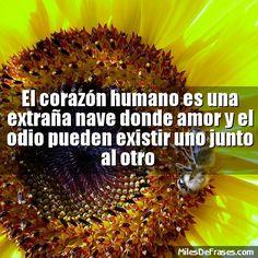 El corazón humano es una extraña nave donde amor y el odio pueden existir uno junto al otro