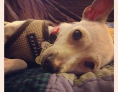 *PIN MY PUP*  Please repin and help Ruby find a forever family! <3