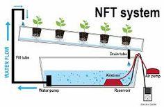 NFT CASERO ¡HAZLO TÚ MISMO!  La técnica de película de nutriente o NFT por sus siglas en inglés, es uno de los métodos de cultivo hidropónico más populares; consiste en una serie de canales inclinados por donde circula una solución nutritiva de manera constante con la cual las plantas crecen y se desarrollan... Lee más dando click en la imagen.