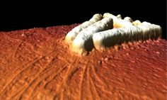 Scientists Dissect the Movement of Bacteria