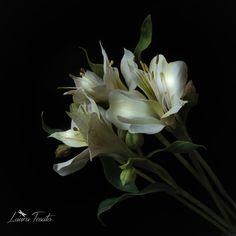 #alstroemeria #white #cold porcelain