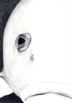 precious things Art Drawings, Cool Photos, Art Photography, Faces, Graphics, Fish, Animal, Illustration, Inspiration