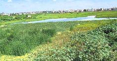 Water Management in the Chola Era and Interlinking the Rivers | சோழர்களின் நீர் மேலாண்மையும், நதி நீர் இணைப்பு திட்டமும்...!