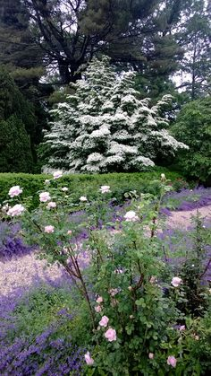 A Visit to Planting Fields Arboretum | Fine Gardening