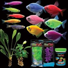 There are six brilliant colors of glofish to choose from for Glow in the dark fish walmart