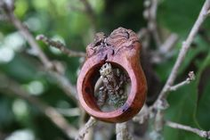 """This is another """"Ent Ring"""" made from the bottle-brush burl I got out of Jill's tree. Any finish one these really pulls the reds and browns right up to the surface. Sadly can't do more pictures as one picture couldn't possibly display all that's going on with this ring. I finished this with CA and used CA to stabilize the ring."""