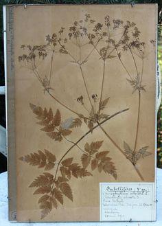 1929 French botanicals