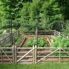 Landscape Deer Resistant Vegetables Design, Pictures, Remodel, Decor and Ideas - page 5