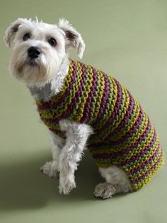 City Stripes Dog Sweater. Knit this cute sweater for your pooch for #NationalDogDay! Make it with 3 skeins of Wool-Ease Thick & Quick in purple, green, and gold - or your own favorite combo! Pattern calls for size 13 (9 mm) knitting needles.