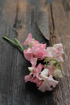 Smell of sweet peas in the evening breeze. #simplethings
