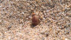 escarabajoplaya1