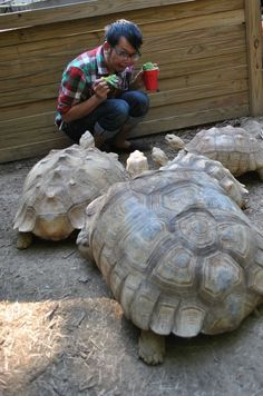 """""""'Feed the turtles,' they said. 'It will be fun,' they said.""""  Check out this ultimate guide to feeding your turtle!"""