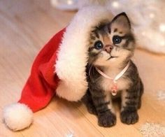 Awe! How precious. and like OMG! get some yourself some pawtastic adorable cat shirts, cat socks, and other cat apparel by tapping the pin!