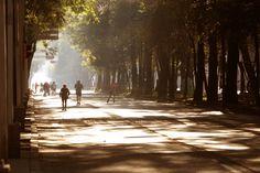 Ciudad de México...bosque de Chapultepec