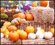 Family Friendly Halloween Traditions   eBay