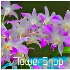 1 USD for 200 orchid seeds at Aliexpress.com   200 PCS 19 Kinds Multiple Color Butterfly Orchid Seeds Balcony Bonsai Seed For DIY Garden Free Shipping,#KSB3K4-in Bonsai from Home & Garden on Aliexpress.com | Alibaba Group