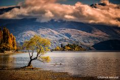 Willow of Wanaka by Patrick Imrutai on 500px