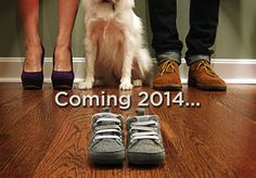 pregnancy announcement with dog - Google Search
