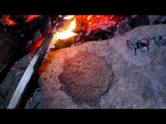 Making Acorn Bread for Survival Part 6 (Acorn Biscuit)