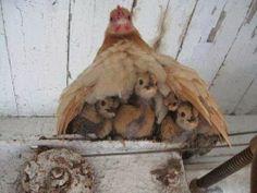 Under Mum's wing