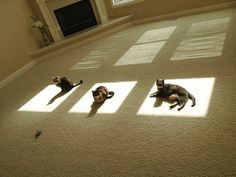 gatos-disfrutando-calor (16)