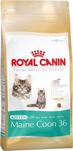 Royal canin Maine coon pienso para gatitos. Pienso para gatos / Comida para gatos seca Royal Canin para gatitos · fbn kitten maine coon. Indicado para cachorros menores de 12 meses de la raza Maine Coon. Ingrediente principal: Ave. En Petclic ahorras mas de un 35% en todas tus compras de piensos y alimentación para gatos. Todas las garantías. Toda la seguridad que necesitas y mas de 5.000 productos de alimentación rebajados. www.petclic.es