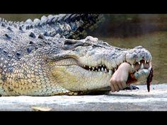 11 Attaques de Crocodiles sur Humains Filmées en Vidéo 2016│Real crocodi...