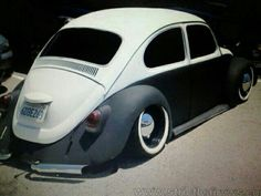 .Dropped Two Tone Beetle