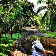 Seriously, this is it.  What life is about.   Walk this trail to town daily,  Near Quepos, Costa Rica  Where real Inidans live (Playa Cocal)