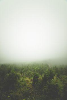 Misty Forest by Chris Zielecki