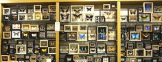 The Evolution Store | Nature, Science and Art