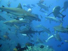 Great B. Reef