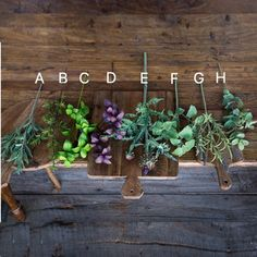 Artificial Kitchen Herbs